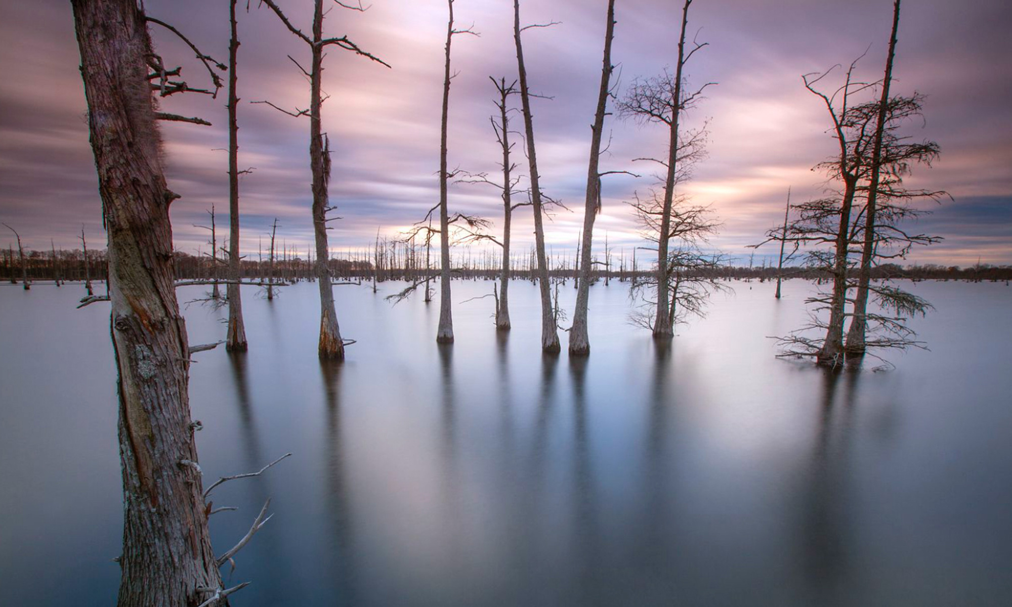 Dead trees in a flooded landscape.